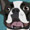 Boston Terrier/Black Buckle
