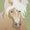 Haflinger/Khaki Buckle