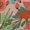 Pretty Poinsettia/Turquoise Buckle