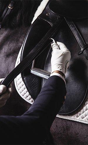 Stirrup Leathers & Irons Image
