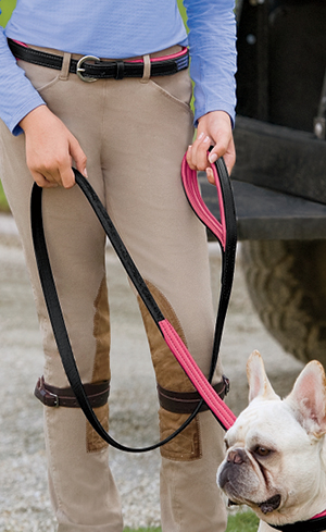 Collars & Leashes Image