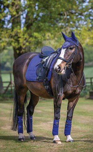 New Dressage Tack Image