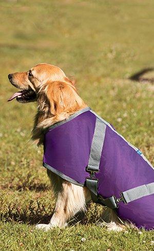 Dog Blankets Image