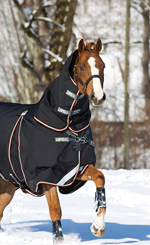 Horse Clothing Image