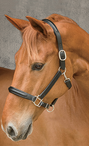 Halters & Leads Image