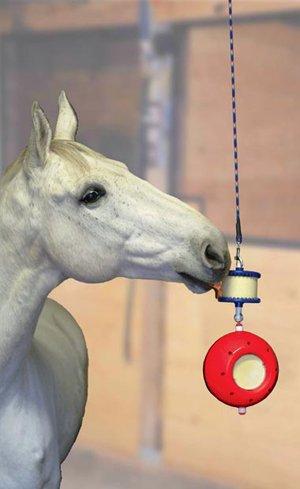 Horse Toys & Treats Image
