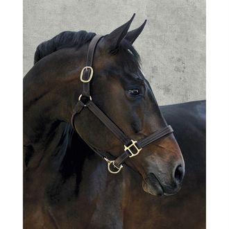 Dover Saddlery® Palermo Triple-Stitched Halter