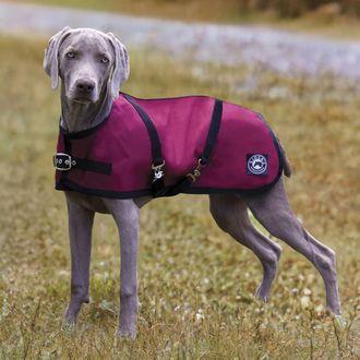 Rider's Internationalby Dover Saddlery® Dog Turnout Sheet